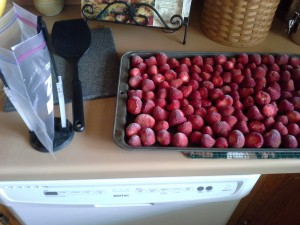 Processing fresh berries 3