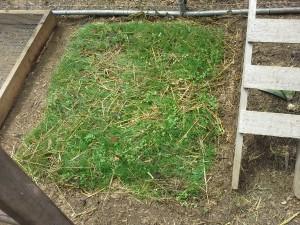 grass growing frames 8