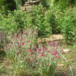 2016 gardens 11