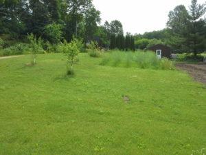 2016 gardens 4
